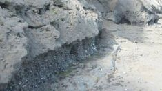Fossils from Whanganui Deep Water, Sandy Beaches, Ocean Beach, Shallow, Fossils, The Rock, Environment, Science, Range
