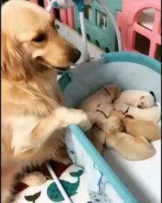 🐕 Mama wiegt ihre Welpen in den Schlaf animaux mignon fille garçon metisse montessori naissance Cute Funny Dogs, Cute Funny Animals, Cute Cats, Cute Animal Videos, Cute Animal Pictures, Cute Dogs And Puppies, Baby Dogs, Doggies, Cute Little Animals