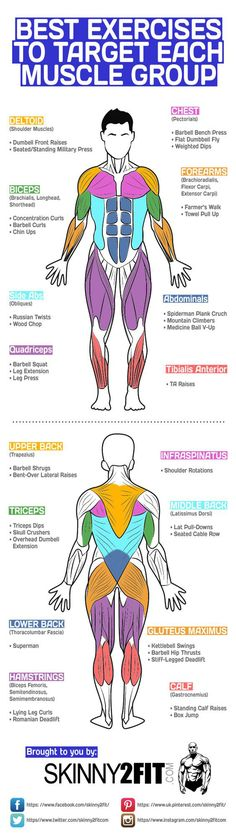 @hotinfographics : Best Exercises To Target Each Muscle Group Infographic - https://t.co/QULeoFQNk8