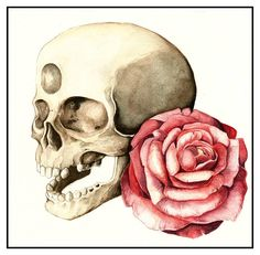 Rose and Skull  Watercolor