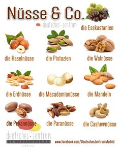 Nüsse Deutsch Wortschatz Grammatik German DAF Vocabulario Alemán
