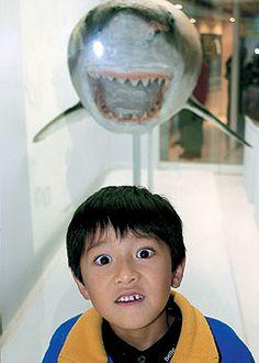 フォトコンテスト:フォトコン写真ギャラリー 2005年入賞作品 写真現像・フォトブック・カメラ販売-キタムラグループ-