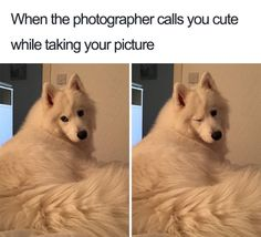 101 Best Funny Dog Memes to Make You Laugh All Day Mans's best friend. To celebrate dogs and the joy they give their owners, here are 101 of the best funny dog memes you'll find. Funny Dog Memes, Funny Animal Memes, Cute Funny Animals, Cute Baby Animals, Funny Cute, Pet Memes, Funny Dog Pics, Funny Husky, Dog Funnies