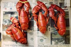 New England lobsters