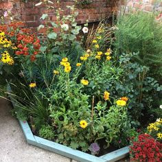 Last year I sowed pot marigolds in the garden to help fill up the space in the garden's first year and it was the best pound I ever spent! They flowered from July to October and were invaluable for keeping the garden colourful in late summer Marigolds In Garden, Slugs In Garden, Hydrangea Garden, Garden Care, Garden S, Summer Garden, Potted Garden, Indoor Garden, Garden Ideas