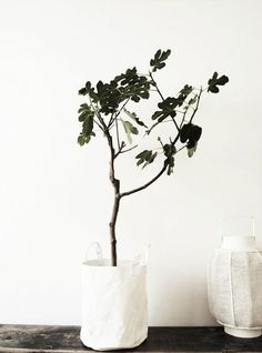 Discover the best easy house plants to have in your home. Find the best storage ideas for your easy house plants from baskets to birdcages to tray tables. For more flower ideas and garden inspiration go to Domino. Green Plants, Potted Plants, Indoor Plants, White Plants, Foliage Plants, Ikebana, Easy House Plants, Fiddle Leaf Fig Tree, Fiddle Fig