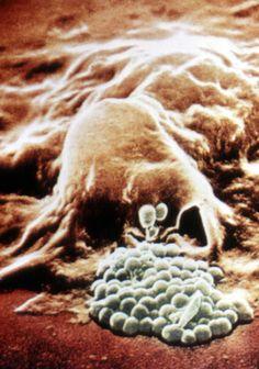 Cell Intelligence | Sondra Barrett, PhD