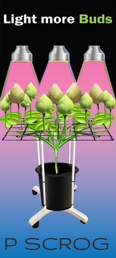 """ScrOG enables growers to fine tune and focus light sources on flowering within the """"optimal light zone"""" Max Yield Made Simple"""