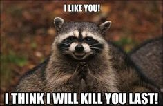 Funny Animal Memes To Make Your Day A Little Better