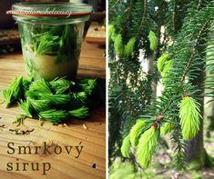 Udělejte si smrkové špičky s medem Korn, Plants, Lemon, Syrup, Plant, Planting, Planets