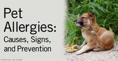 If your dog or cat sneezes or itches uncontrollably during the summer or spring months, he may have seasonal allergies. http://healthypets.mercola.com/sites/healthypets/archive/2012/06/22/pets-seasonal-allergies.aspx