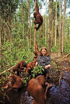 Birute Mary Galdikas has devoted her life to saving the great ape. But the orangutan faces its greatest threat yet
