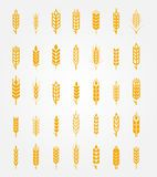 Wheat Vector - Download From Over 59 Million High Quality Stock Photos, Images, Vectors. Sign up for FREE today. Image: 6519592