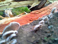 Fa gombák
