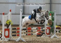 Dylan and peggy sue III qualifying for The Scope Showjumping Festival 2014 at South View Equestrian Centre