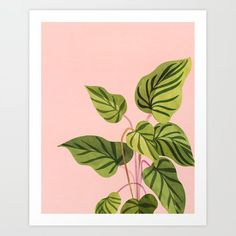 Upstart / Tropical Plant Mini Art Print by kristiangallagher Plant Painting, Plant Art, Diy Painting, Painting & Drawing, Plant Stem, Art Sur Toile, Simple Canvas Paintings, Mini Canvas Art, Plant Illustration