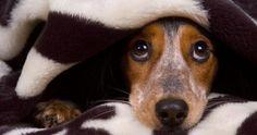 Cómo calmar la ansiedad de los perros durante la noche