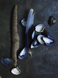 Indigo shells via Chris Court Photography Azul Indigo, Bleu Indigo, Cyan, Color Stories, Still Life Photography, Color Trends, Shades Of Blue, Color Inspiration, In This World
