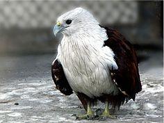 Bird Sanctuaries in West Bengal, India @ Sanctuariesindia.com