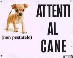 Memes Humor, Jokes, Really Funny, Funny Cute, Super Funny, Funny Images, Funny Photos, Chihuahua, Savage Quotes