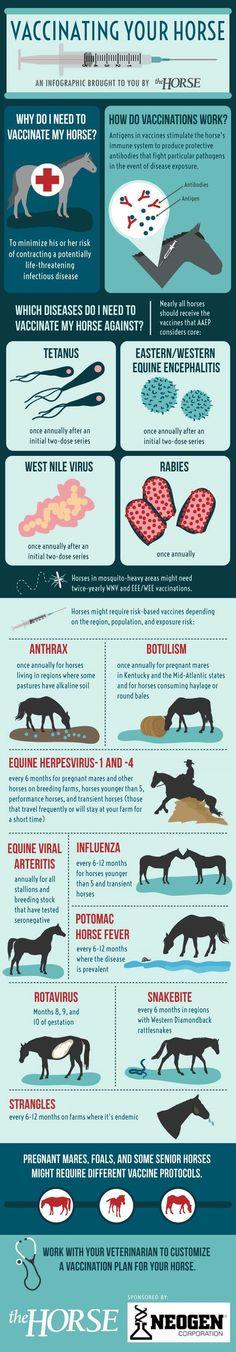 Infographic: Vaccinating Your Horse | TheHorse.com