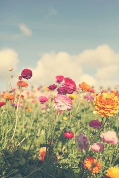 flower fields | Flickr - Photo Sharing!