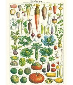 Cavallini & Co Poster/cadeaupapier - Jardin