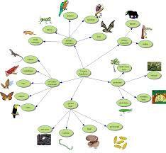 Image result for tropical rainforest food web
