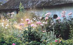 English garden full of roses
