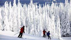 Snow-offs ... mastering the slopes at Silver Star Ski Resort.