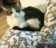 Beanbag for cats Leo Love, Bean Bag, Unicorn, Cats, Handmade, Animals, Happy, Tomy, Pet Dogs