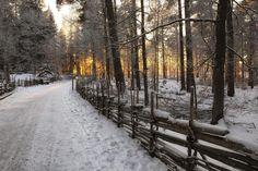 Vallaskogen, Linköping... Där vi red ut ibland; hur underbart?!