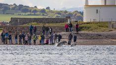 Wildlife in Scotland Dundee, Scotland Travel, Dolphins, Wildlife, History, Scotland Trip, Small Towns, Historia, Seal
