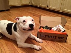 Loving their Bullymake Box! Designed for Power Chewers. http://bullymake.com/?utm_source=pinterest&utm_medium=pinterest-board&utm_content=bullymake-box-board&utm_campaign=bullymake-box-board