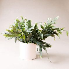 Raw Earth Hanging Planter - Chalk White– Pigment Large Planters, Hanging Planters, Wall Planters, Living Wall Planter, Let It Shine, Self Watering, Milk Jug, Low Lights, Living Room