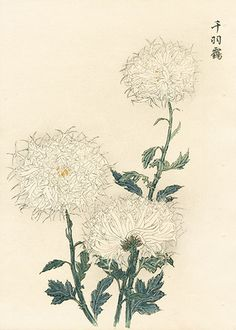 長谷川契華 Keika Hasegawa 『契花百菊 千羽靎』Keika Hasegawa Chrysanthemum Wood Block Prints 1st Edition 1893