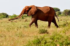 IFAW's Jeff Flocken - Why we need to stop senseless trophy hunting of African elephants.