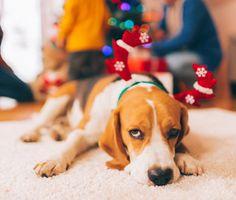 Sick Christmas dog
