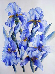 Champ iris