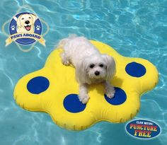 Paws Aboard Doggy Dog Pool Float Lazy Water Raft Puncture Resistant (Small 25.5 x 29)