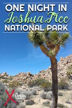 Find out what it's like to spend a night in Joshua Tree National Park. Usa Travel Guide, Travel Usa, Travel Guides, Travel Tips, Travel Advice, Travel Destinations, American National Parks, Us National Parks, National Trust