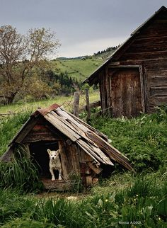 Farm House & Dog House Getting Old
