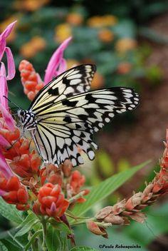 """Butterfly""  -- by Paula Rabasquinho"