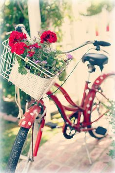 Inspiration Lane ~ red and white polka-dot bicycle with a basketful of red geraniums plus other flowers