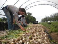 Why We Farm: How Young Farmers Can Make a Living