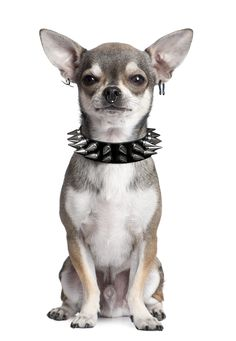 This is why I don't have a dog...he would look like this & ride on my Harley with me!