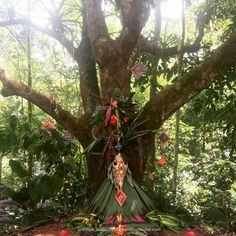 Beautiful Altar created at a Kambo Cleanse Retreat in Costa Rica