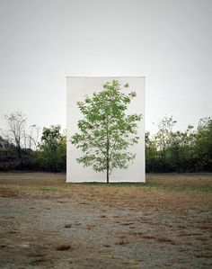 """In his """"Tree"""" series, South Korean artist and photographer Myoung Ho Lee singles out one tree and then places it in front of a giant white canvas. Land Art, Canvas Background, Korean Artist, Art Plastique, Tree Art, Public Art, Artist At Work, Installation Art, Art Photography"""