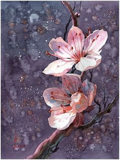 deviantart sakura by on sakura by on DeviantArtYou can find Chinese art and more on our website Sakura Painting, Cherry Blossom Painting, Oil Painting Flowers, Watercolor Flowers, Watercolor Paintings, Painting & Drawing, Paintings Of Flowers, Watercolour, Collage Des Photos