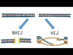 Jennifer Doudna (UC Berkeley / HHMI): Genome Engineering with CRISPR-Cas9 -